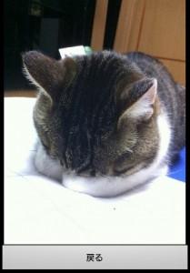 猫のごめん寝・すまん寝画像集