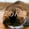 猫の「ごめん寝」画像だけを収録した写真集アプリが人気