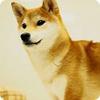 スマホで柴犬が飼えるアプリ 「ポケット哺乳類~柴犬~」が話題に
